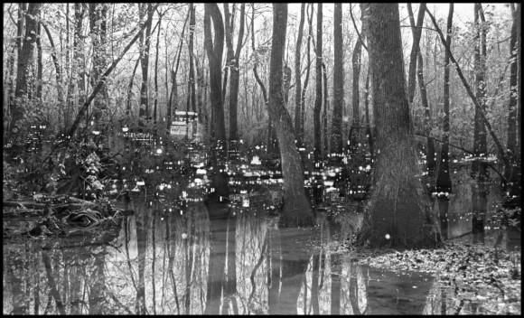 swamplights-2