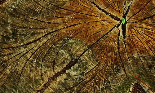 7-wrinkle-ring-tree-stump-texture