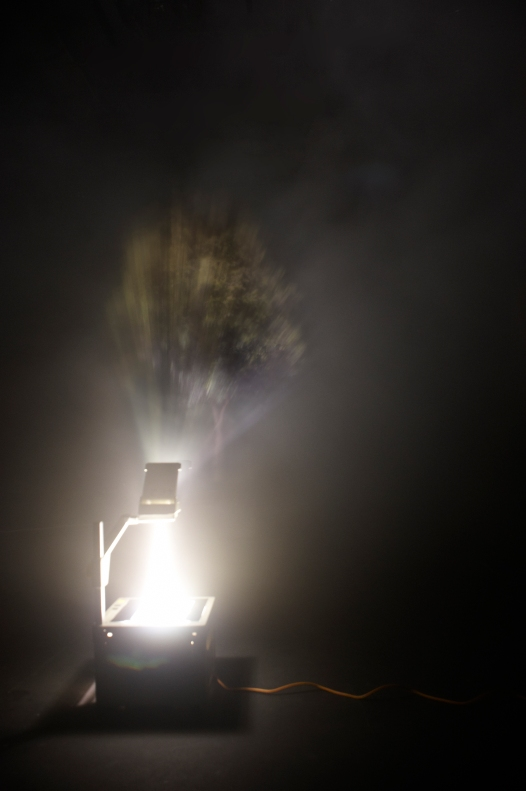 A Single Tree From Utopia. Installation of Overhead Projector on Smoke 2011